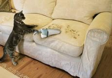 cat cleans pet hair with vacuum